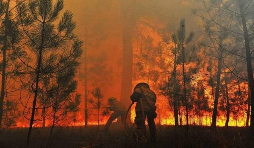 Em 2020, brigadistas foram essenciais no combate ao fogo.  — Foto: Reprodução