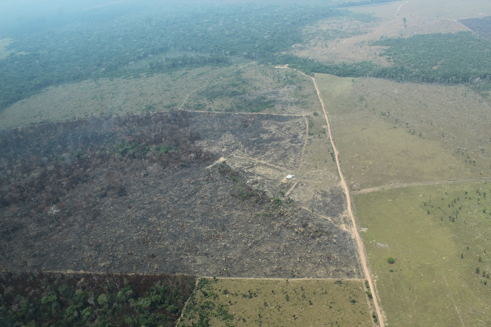 Desmatamento em área do município de Apuí, Amazonas — Foto: Jonatas Boni/G1