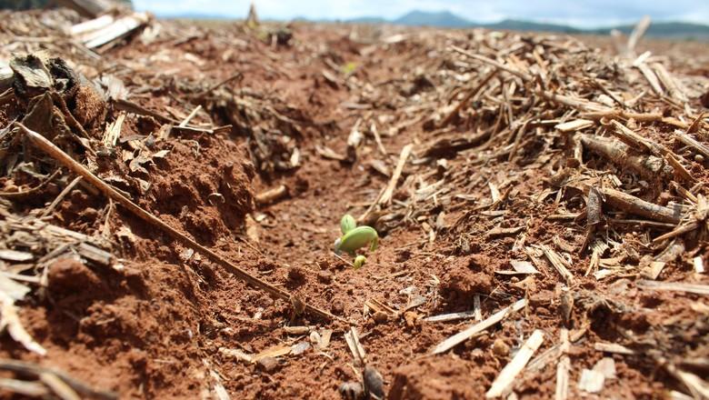 soja-plantio-germinação (Foto: Laura de Paula/Aprosoja-GO)