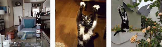 O gato Keys (Foto: @goalkitty/Instagram)