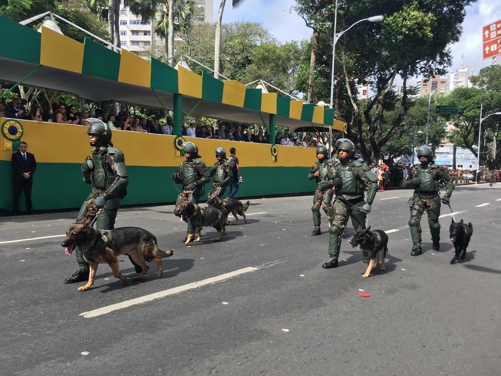 Tropa do Exército desfila com cachorros no 7 de setembro, em Salvador — Foto: João Souza/ G1