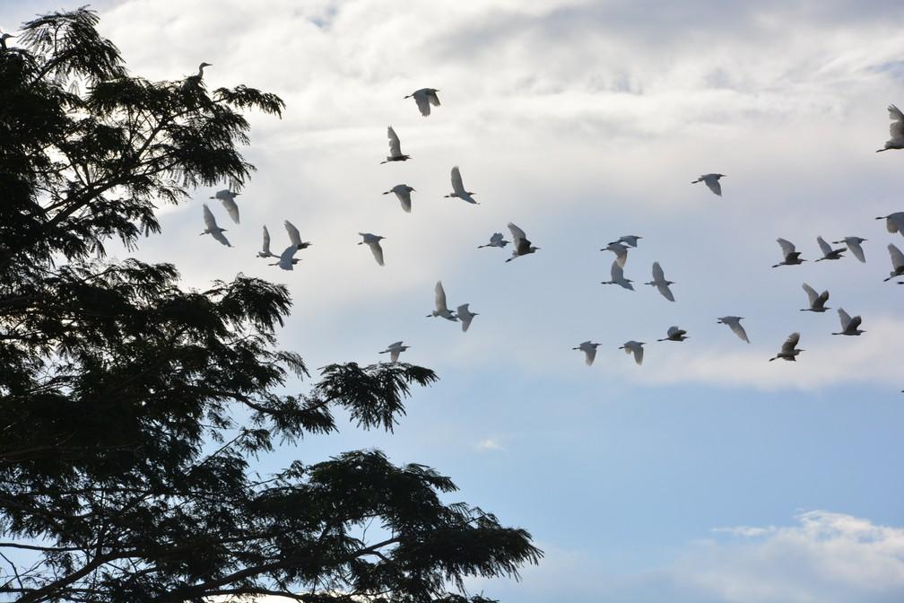 Garças voando em Porto Velho — Foto: Renata Silva/Arquivo Pessoal