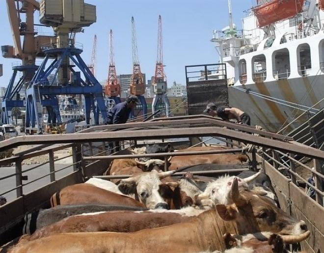 exportação de gado vivo (Foto: Divulgação)