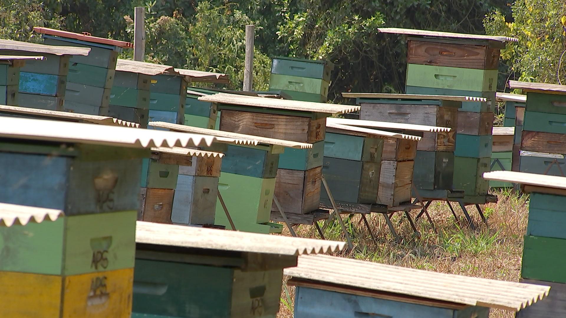 Preço do mel melhora para apicultores