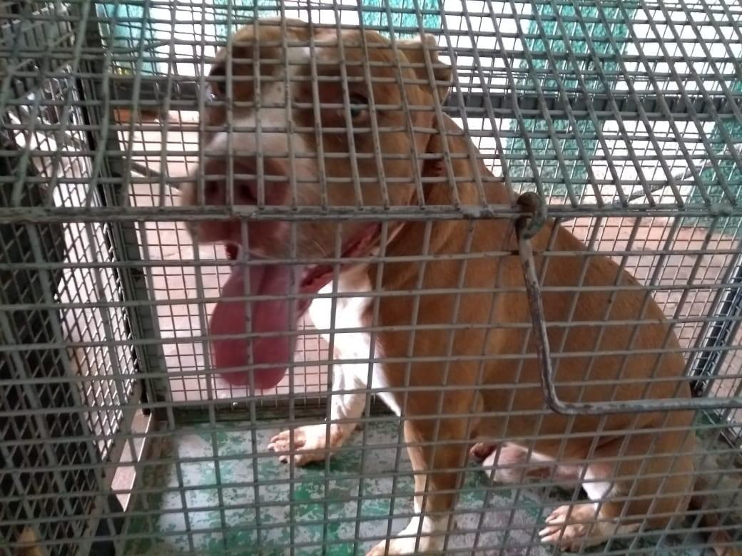 Homens ficam feridos após serem atacados por pitbulls em Tupi Paulista