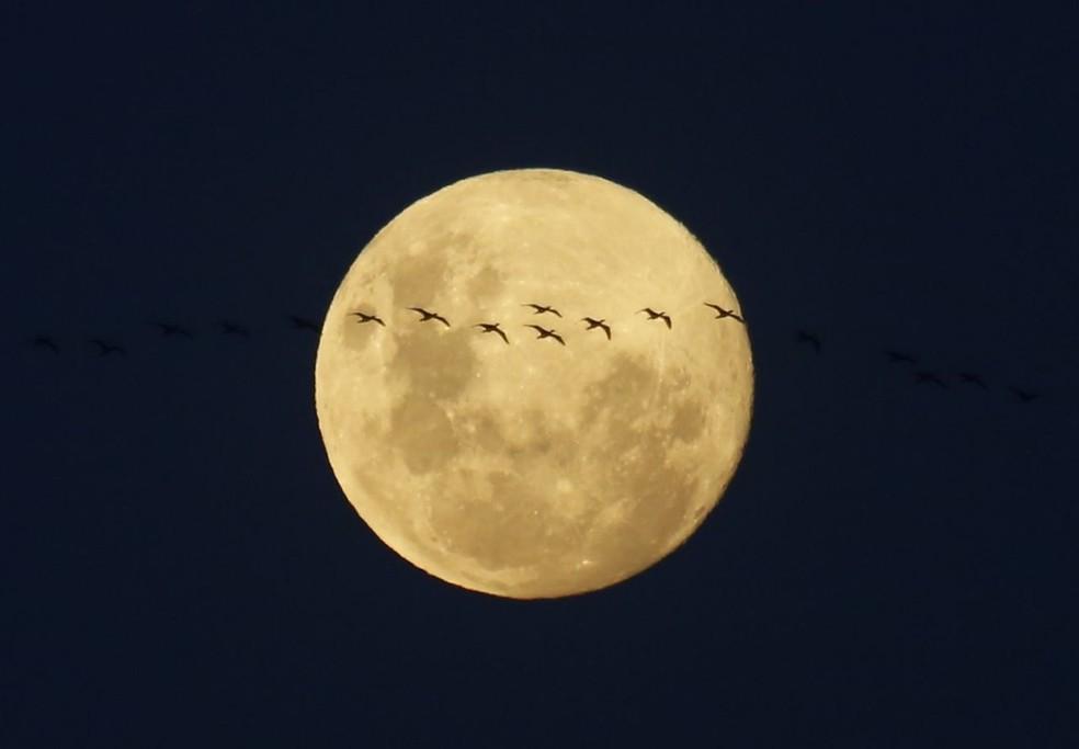 Lua ilumina céu desta sexta-feira (30) no Rio de Janeiro, prévia da Lua Azul (Foto: Marcos Serra Lima/G1)