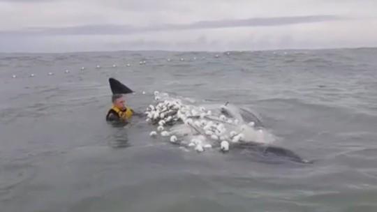 Surfista leva 3h para salvar filhote de baleia preso em rede de pesca em SC; VÍDEO