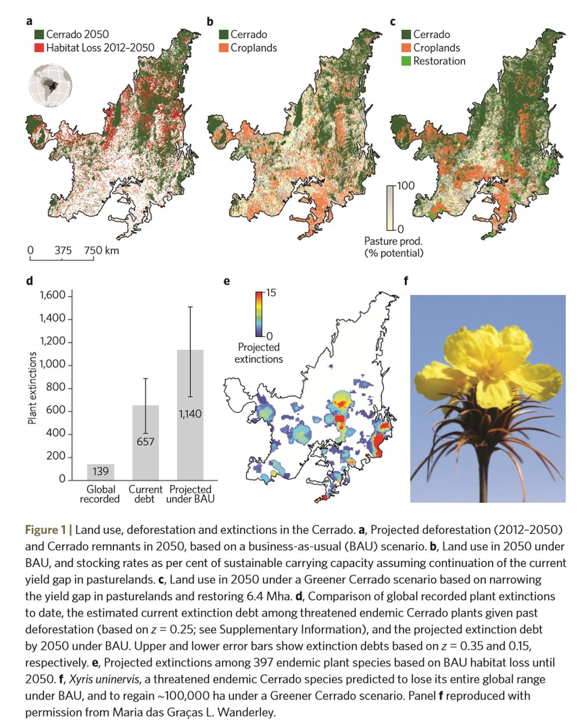 Em 30 anos, cerrado brasileiro pode ter maior extinção de plantas da história, diz estudo