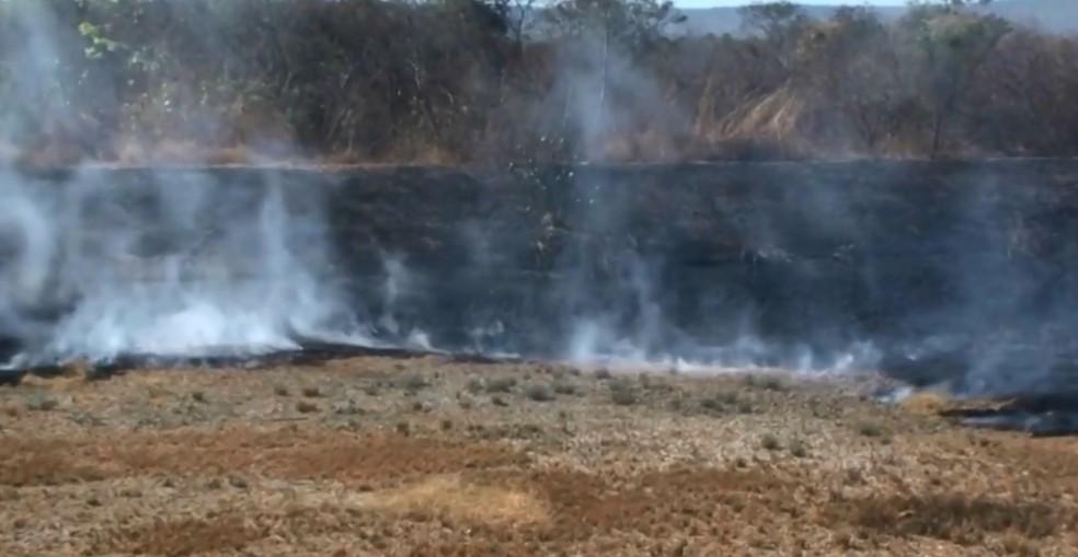 Fogo se alastrou após um morador queimar lixo perto de vegetação seca (Foto: Reprodução/TV Oeste)