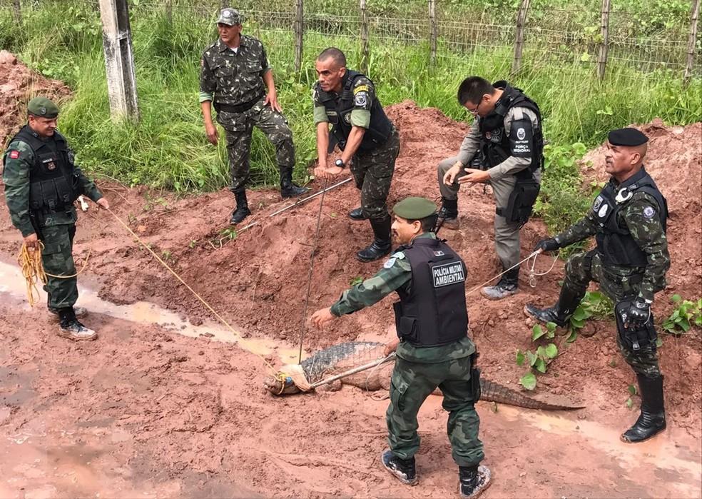 Vários homens trabalharam no resgate do jacaré, em João Pessoa (Foto: Walter Paparazzo/G1)