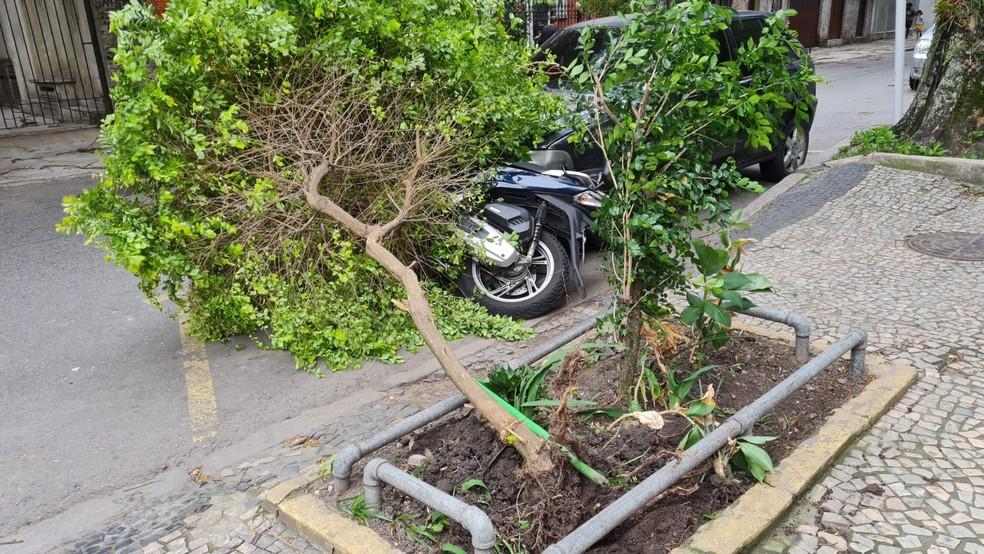 Vento derruba árvore na Rua Álvaro Ramos, em Botafogo — Foto: Eduardo Pierre/g1