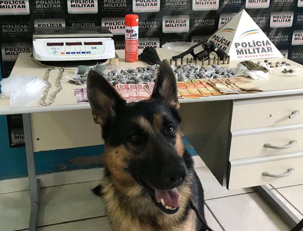 Cão ajudou nos trabalhos da PM (Foto: Polícia Militar/Divulgação)
