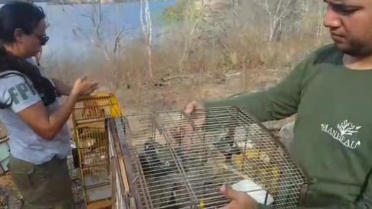 Mais de 300 animais resgatados em fiscalização em AL são devolvidos à natureza