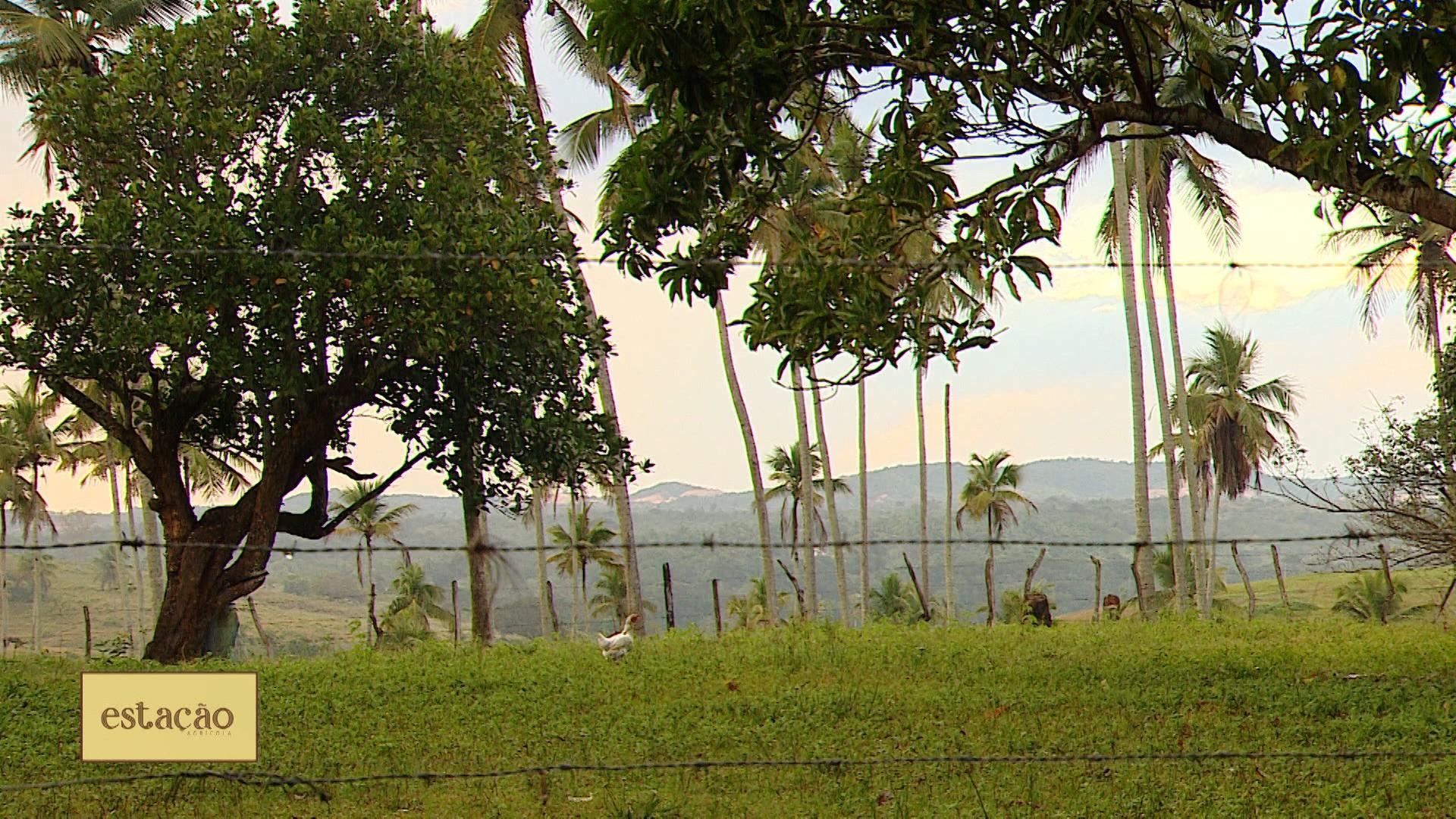 VÍDEOS: Estação Agrícola deste domingo, 20 de junho