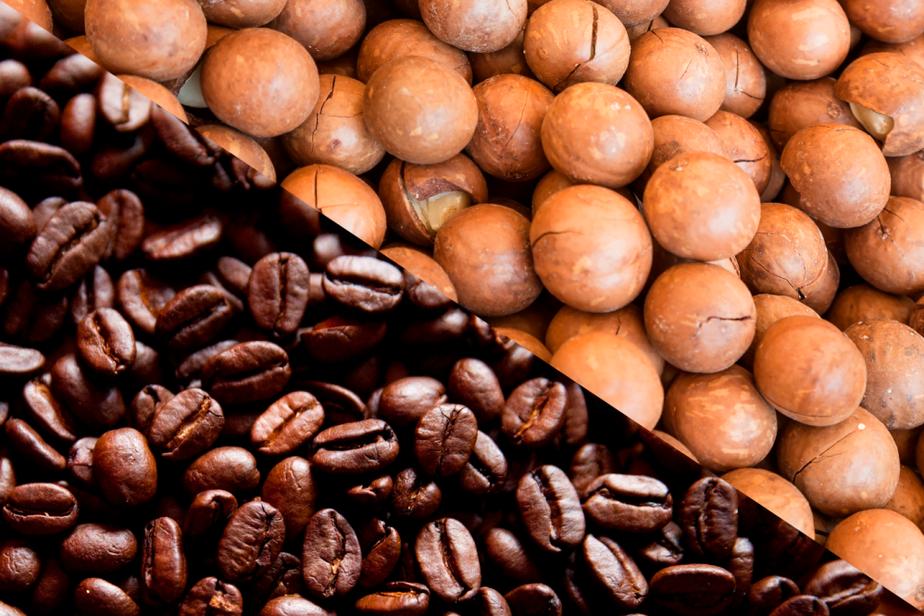 Plantio de macadâmia com café eleva produtividade em mais de 250%