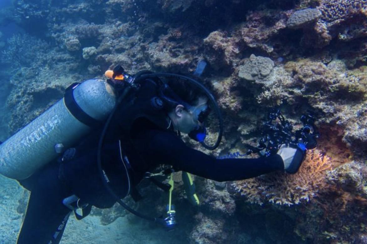 No fundo do mar, cientistas analisam corais (Foto: Varsha Mathur/ Divulgação)