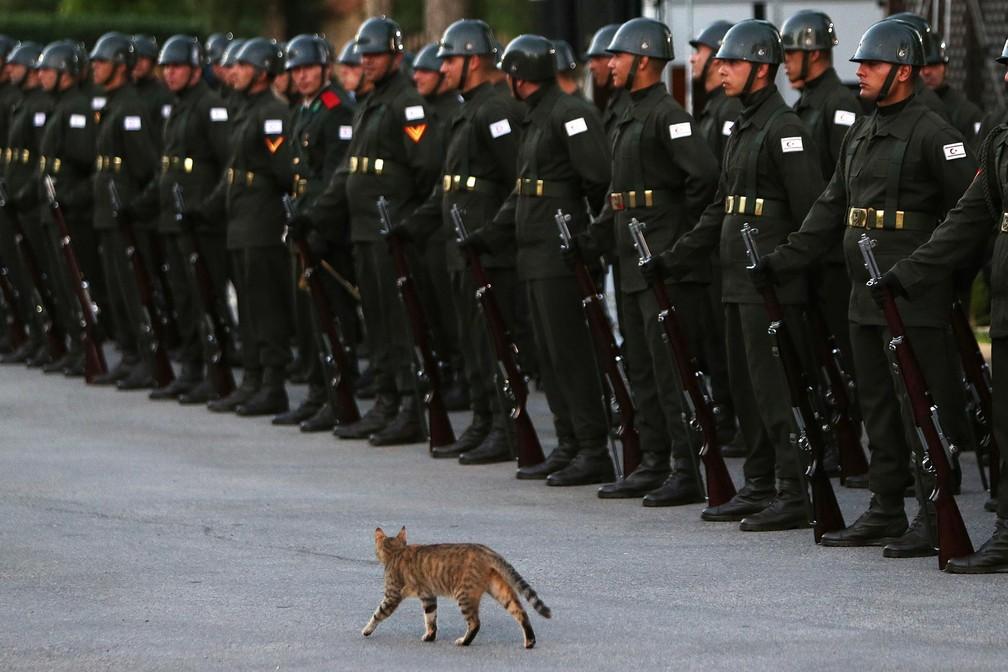Gato 'passa tropa em revista' em Chipre (Foto: Petros Karadjias/AP)