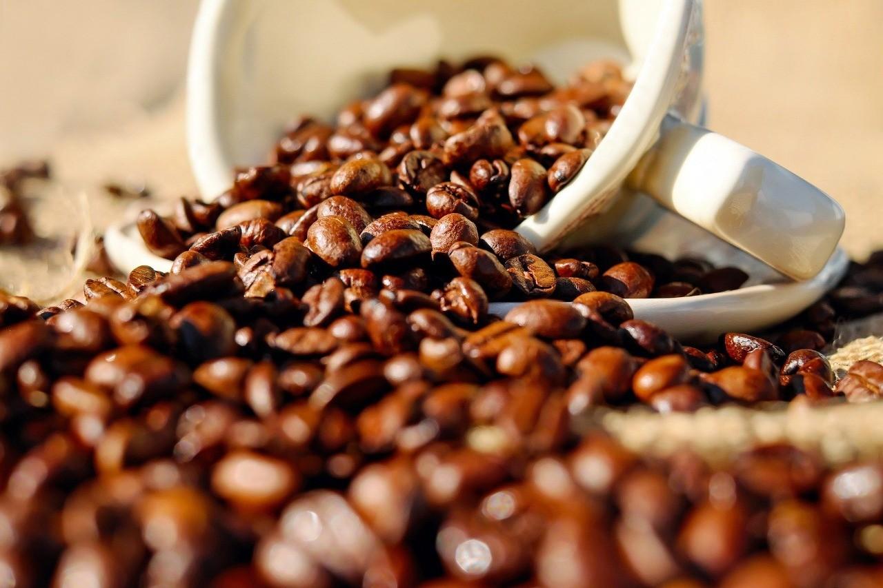 Rondônia possui mais de 100 produtores de café de qualidade em 2021