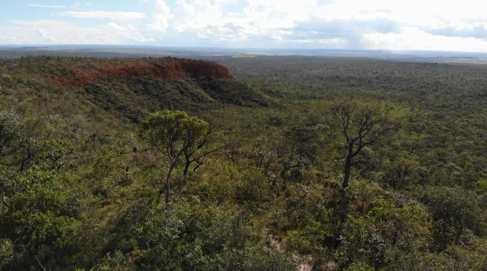 Ameaçado, o bioma Cerrado é pouco protegido por lei — Foto: Terra da Gente