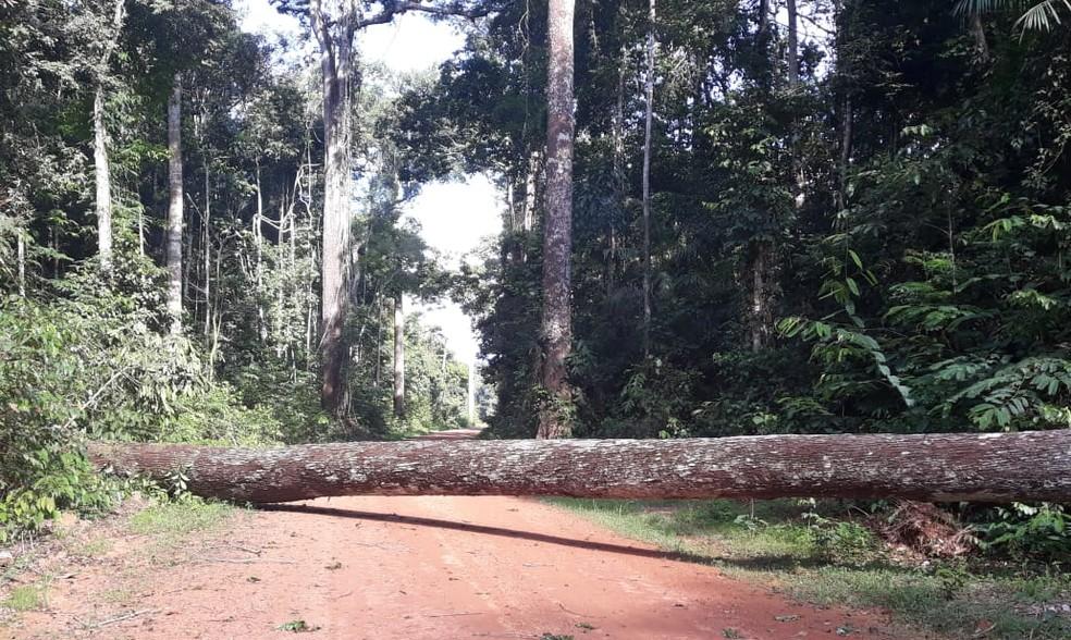 Servidores estavam na região desde o dia 9 de novembro em operação contra crimes ambientais.  — Foto: ICMBio/Divulgação