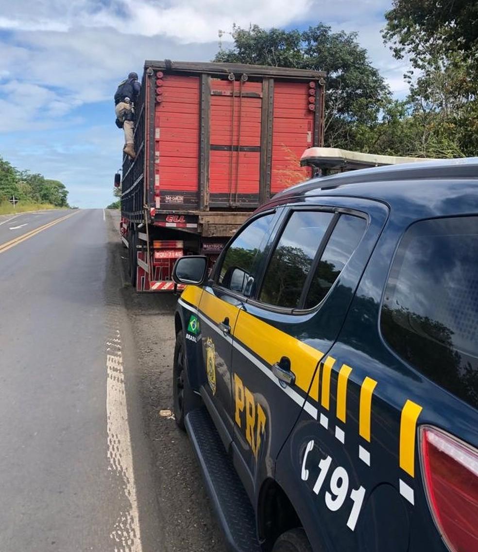 Polícia Rodoviária detém motorista por transporte irregular de suínos na BR-316 no maranhão — Foto: Divulgação/Polícia Rodoviária Federal