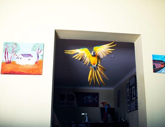 Atravessar os cômodos da casa de Karen Adams, em Overton, na Escócia, faz parte da rotina de Max, uma arara-canindé. Nos Estados Unidos, donos de pássaros costumam cortar as asas de seus bichos. No Reino Unido, a tendência é deixá-los livres para voar (Foto: Miisha Nash)