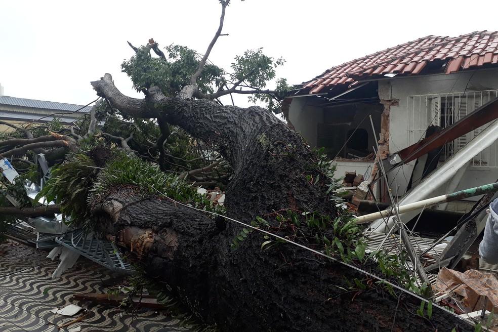 Árvore cai e destroi casa em São Caetano do Sul após temporal — Foto: Nivaldo Lima/Estadão
