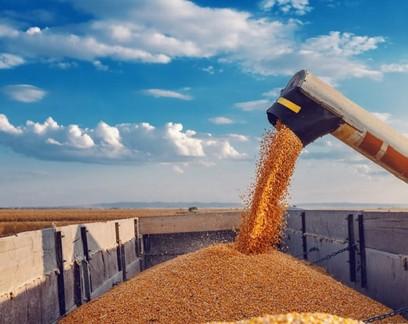 Valor da produção agropecuária cresce 10% para R$ 1,103 trilhão