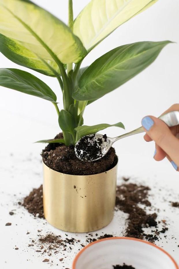 Café faz bem para as plantas? Saiba como ele age no solo (Foto: Divulgação)