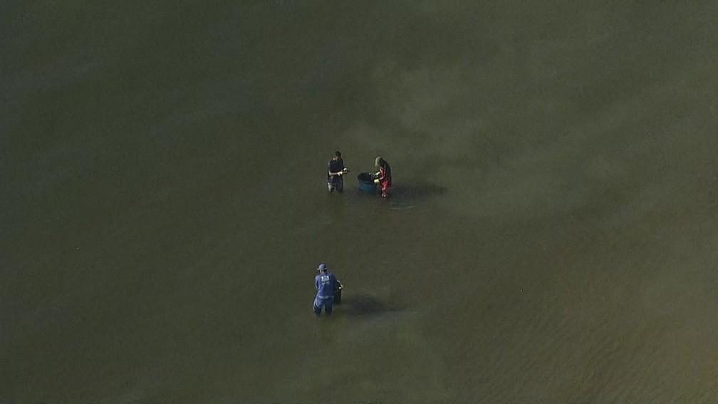 Limpeza do óleo no mar é feito com baldes na Praia de Barra de Jangada, em Jaboatão dos Guararapes — Foto: Reprodução/TV Globo
