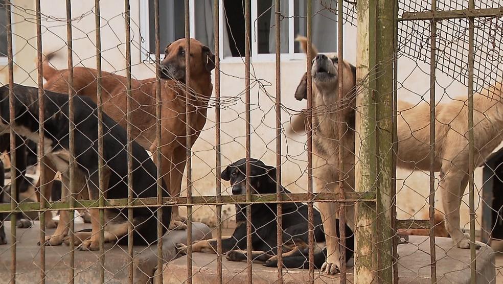 Casal de Curitiba recebe ajuda para cuidar dos 138 cachorros que adotaram — Foto: Reprodução/RPC