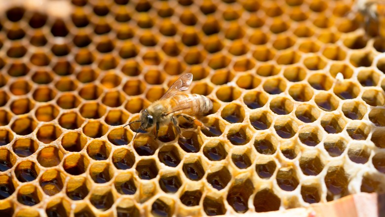 abelha-mel-apicultura-favo (Foto: Norio NAKAYAMA/CCommons)