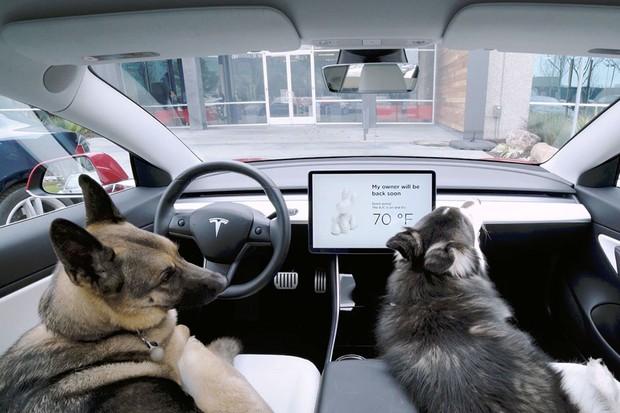 Tesla_Dog Mode_Modo Cão (Foto: Divulgação)