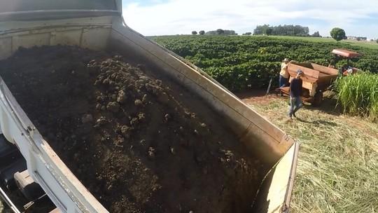 Uso de lodo melhora qualidade do solo e aumenta produtividade