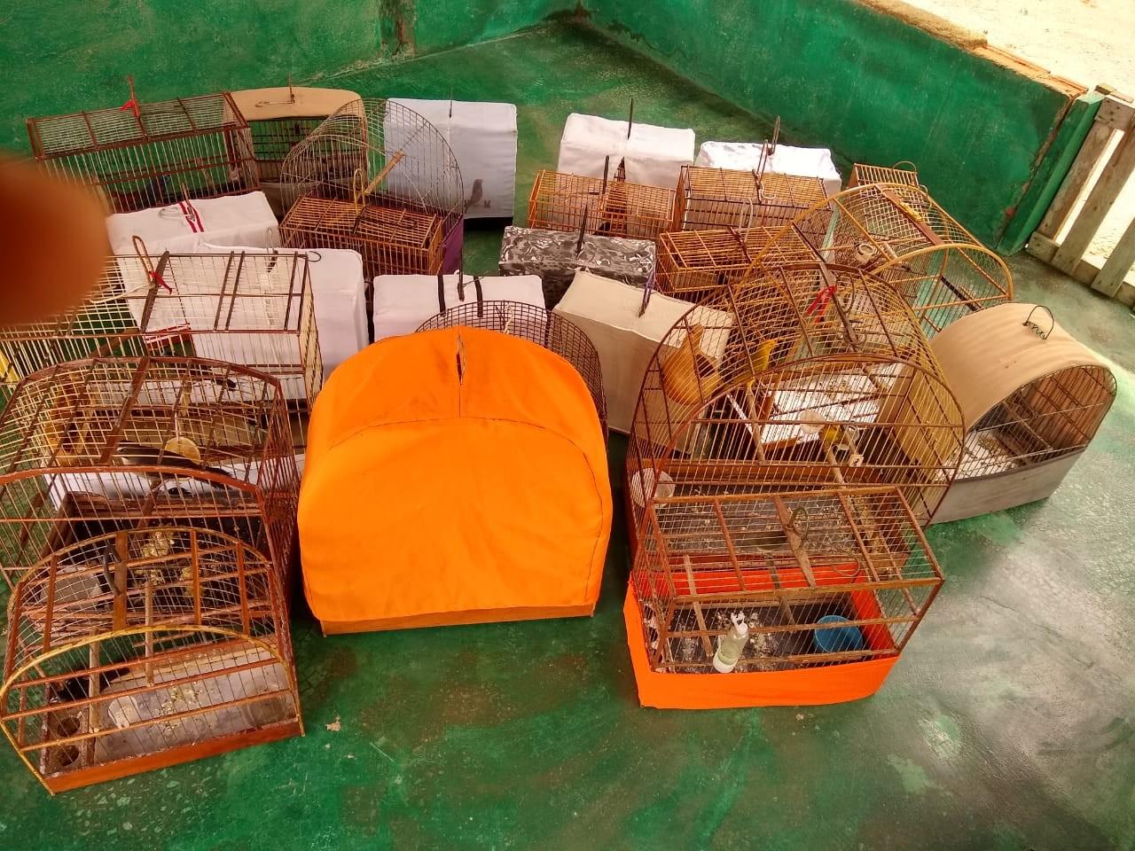 Polícia apreende 25 aves em cativeiro ilegal em Nova Mamoré, RO