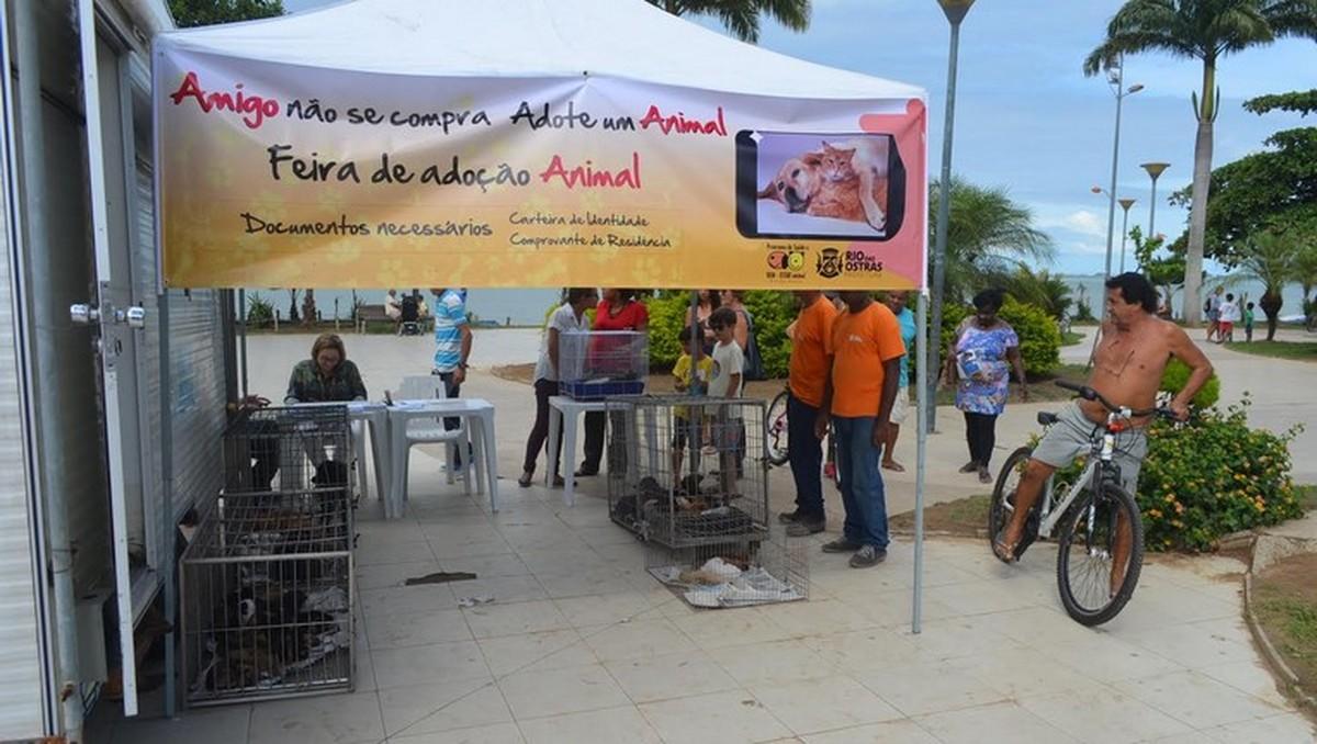 Rio das Ostras, RJ, recebe feira de adoção de cães e gatos nesta sexta-feira