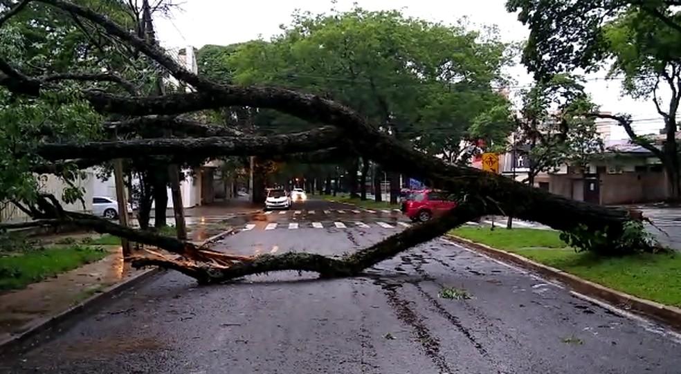 Árvore caiu em rua de Maringá — Foto: Reprodução/RPC