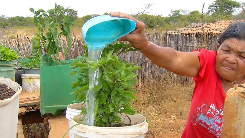 Agricultora Maria Benedita dos Santos, Dona Neguinha, volta a plantar em sua horta após período de seca (Foto: Reprodução/Inter TV Costa Branca)