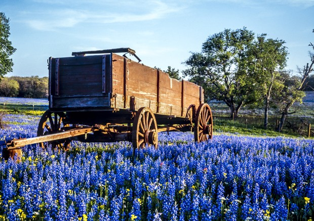 Wagon in field of bluebonnets in texas hill country (Foto: Getty Images/iStockphoto)
