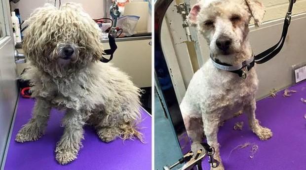 """Cachorrinhos têm a chance de """"melhorar"""" sua imagem com ajuda do empresário Mark (Foto: Divulgação)"""