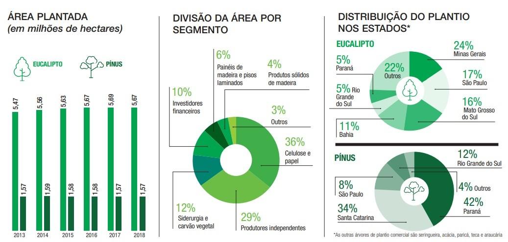 Gráfico reflorestamnto (Foto: Divulgação)