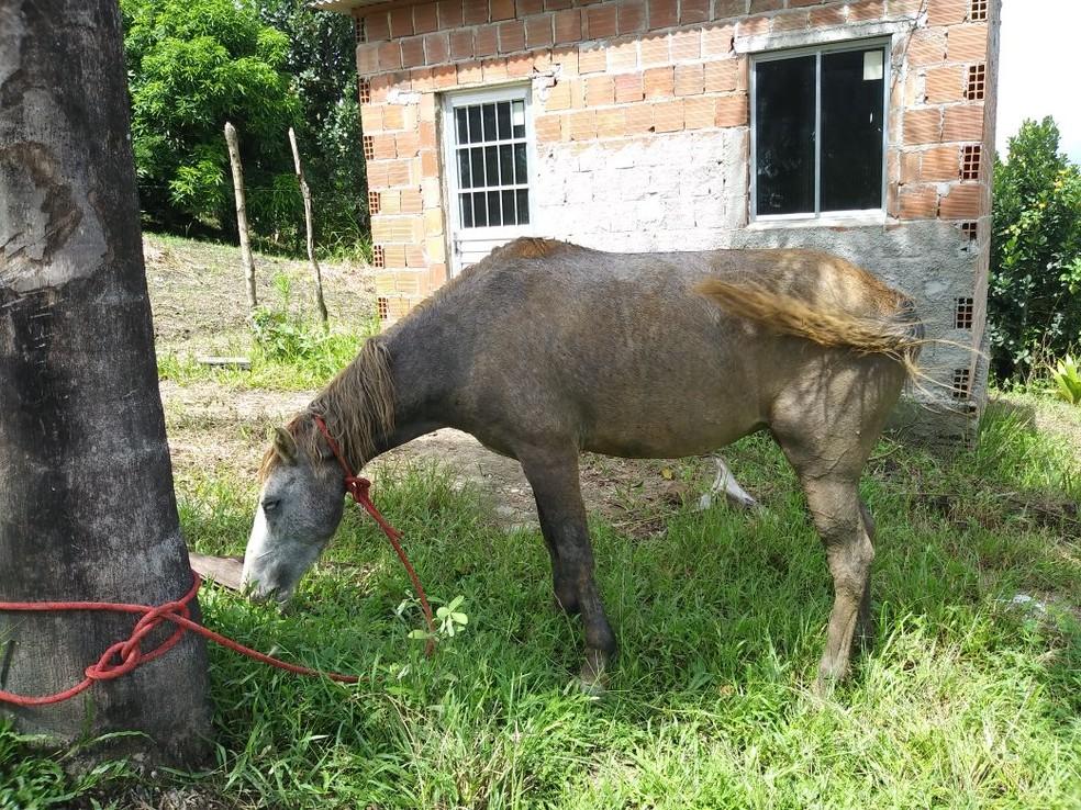 Após ser resgatado pelos bombeiros, cavalo foi devolvido ao dono (Foto: Corpo de Bombeiros/Divulgação)