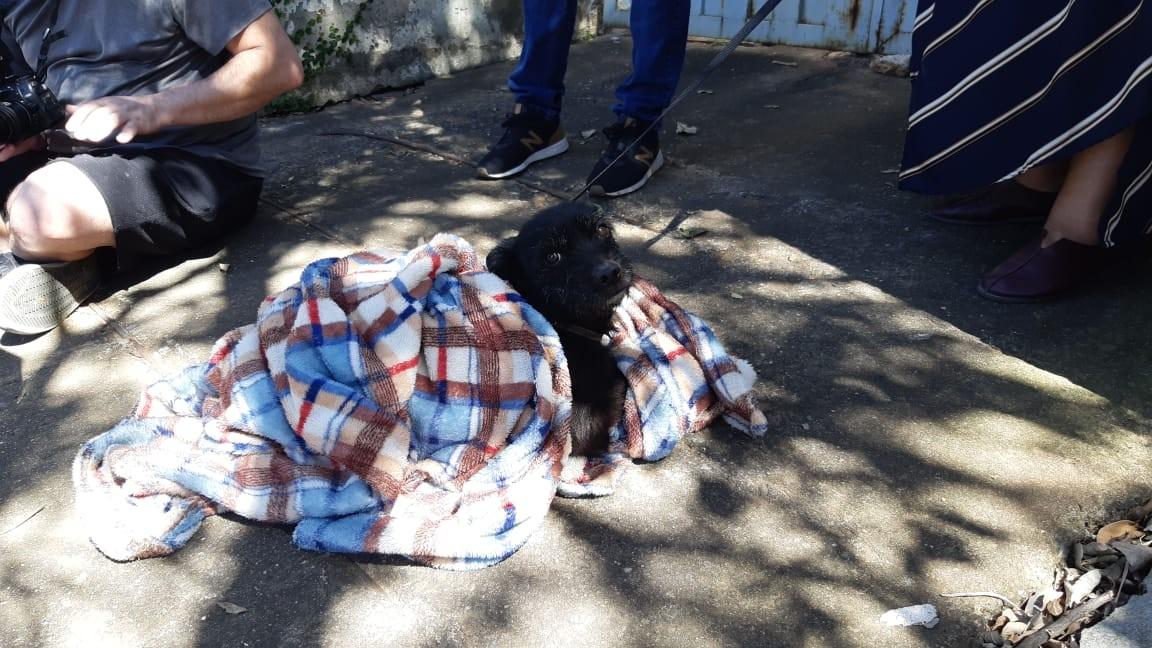 Nº de denúncias de maus-tratos a animais cresce 34% em Campinas, informa Depa - Notícias - Plantão Diário
