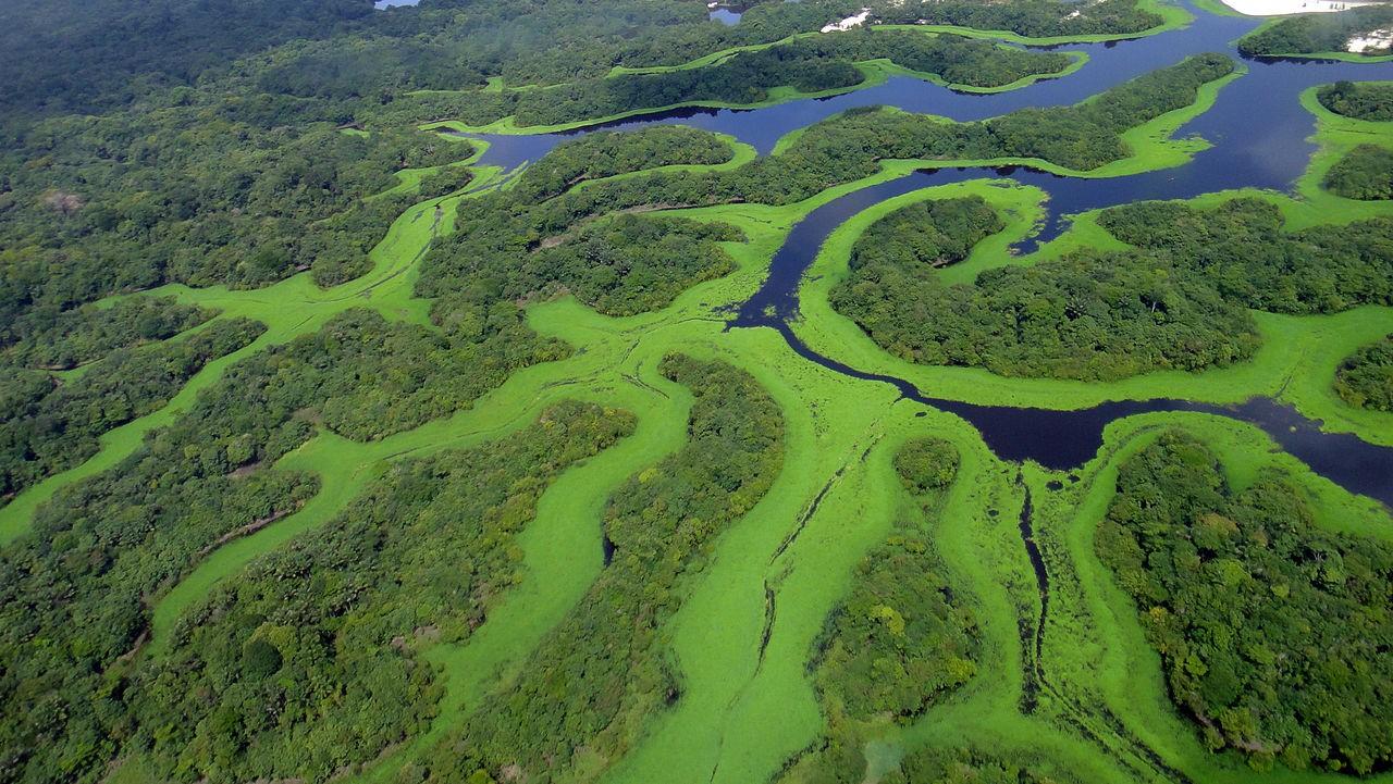 Amazônia (Foto: Wikimedia Commons)