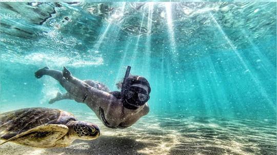 Max Fercondini elege foto preferida da namorada Amanda Richter em mergulho com tartarugas