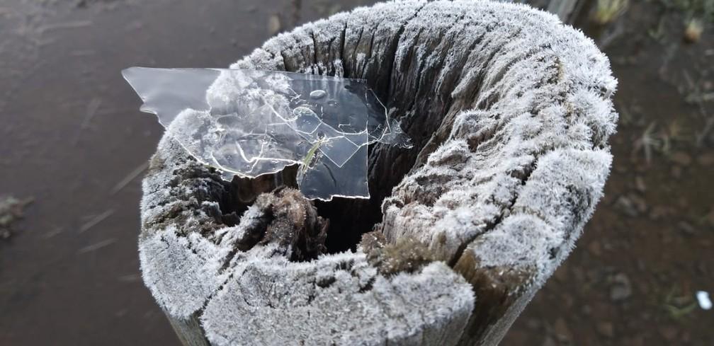 Fina camada de gelo que ficou entre as plantas em São Joaquim — Foto: Wagner Urbano/ NotiserraSC