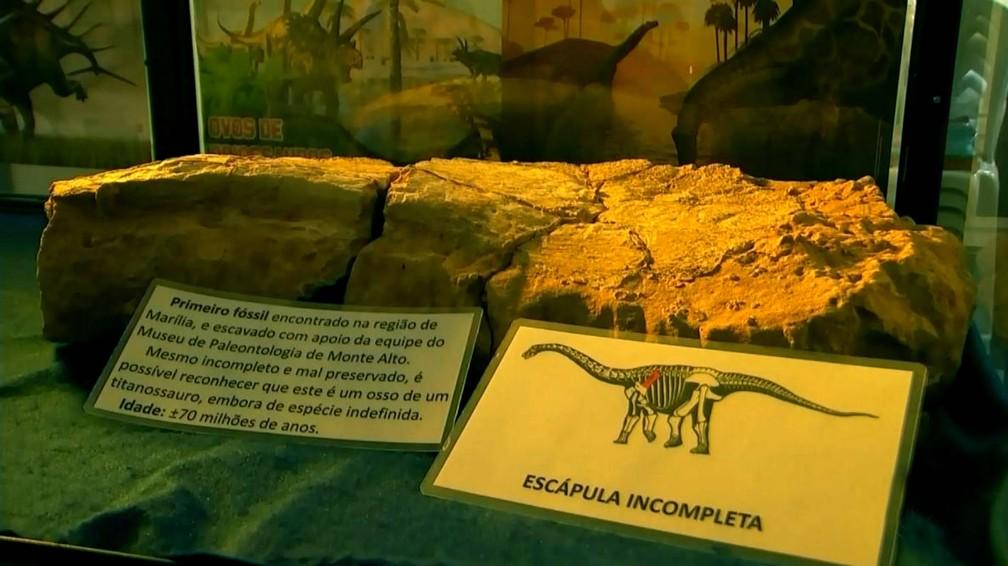 Museu de Paleontologia de Marília já possui outras fósseis de titanossauro encontrados na região (Foto: TV TEM/Reprodução)