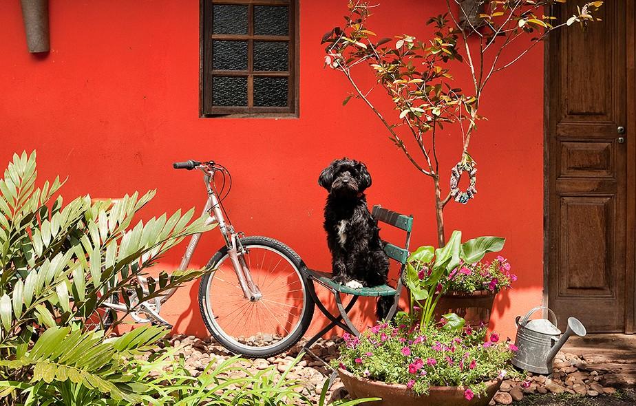 Cachorros e gatos de estimação podem comer plantas do seu jardim. Atente-se às espécies, para que não façam mal ao animal. Ambiente projetado pela paisagista Susana Bandeira