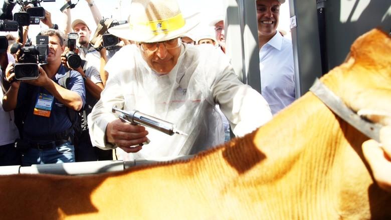 agrishow-boi-vacina-aftosa (Foto: Pierre Duarte/Ed. Globo)