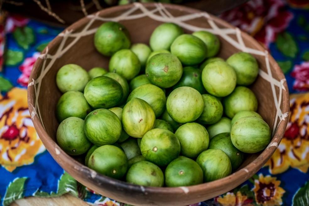 Umbu é fruta nativa da caatinga nordestina — Foto: Divulgação/Coopercuc